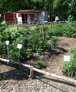 The Genesis Gardens grow a variety of produce, from tomatoes to squash to lettuce!