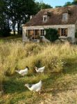 Our inspiration for French Farmhouse! http://media-cache-cd0.pinimg.com/736x/a8/28/f2/a828f259dc53c835ff85a66d2cca9831.jpg