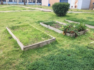 These are the current gardens that will be remade later on that we must consider when we are making the greenhouse. Photo Credit: Chandler