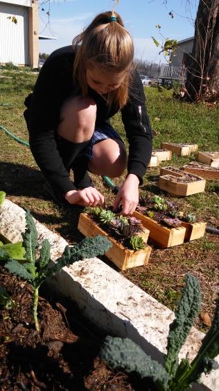Ryanna H plants succulents into letter P.